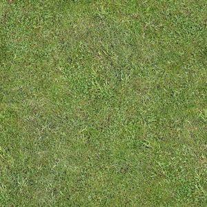 Grass_C_Diff